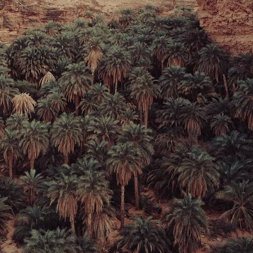 نخلستان پیارم حاجی آباد هرمزگان